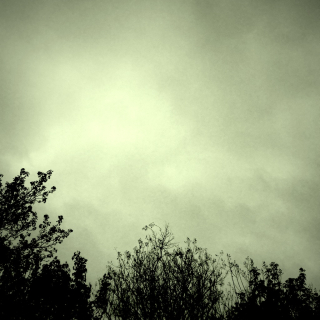 2 Gray
