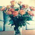 Darla's Roses